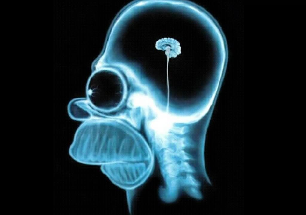 móżg człowieka