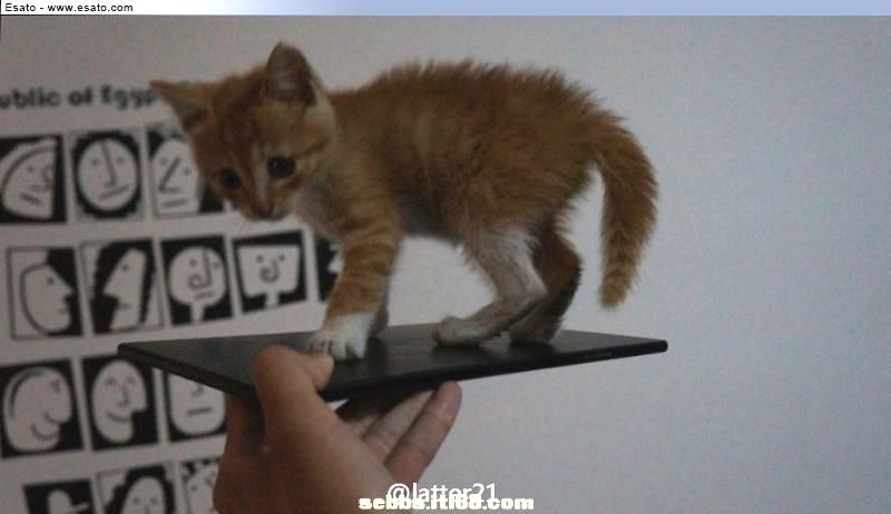 Sony-Togari-Cat