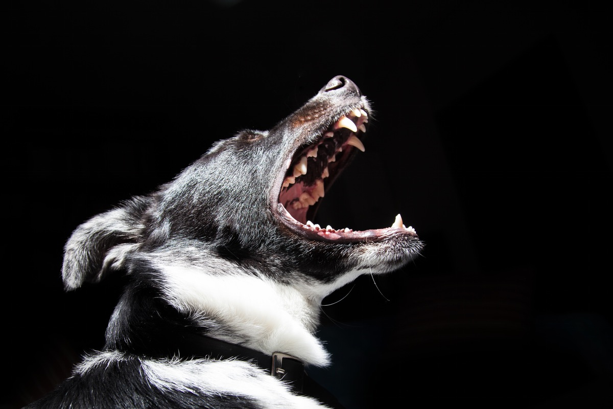 animal-dog-pet-dangerous