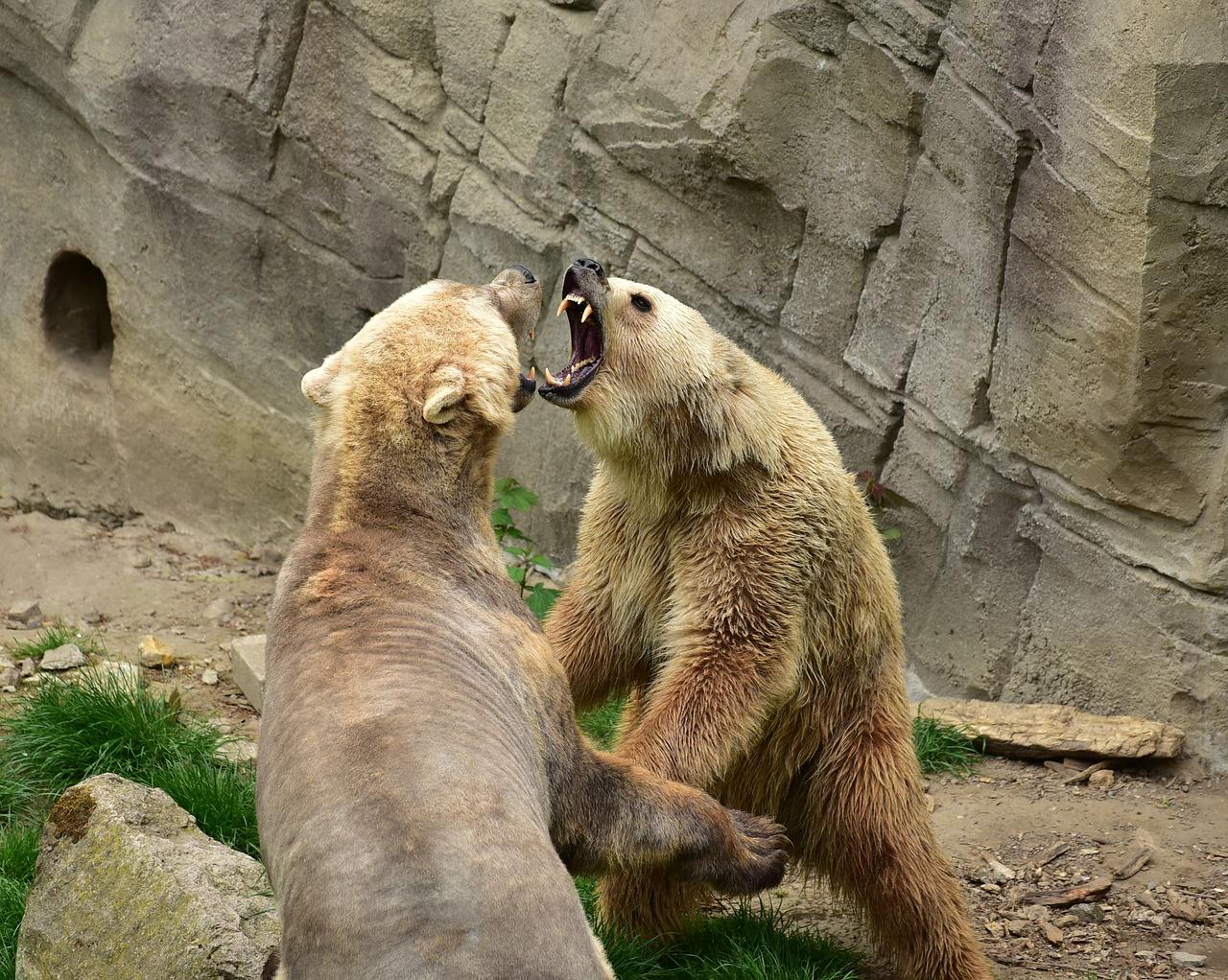 bear-783014_1280