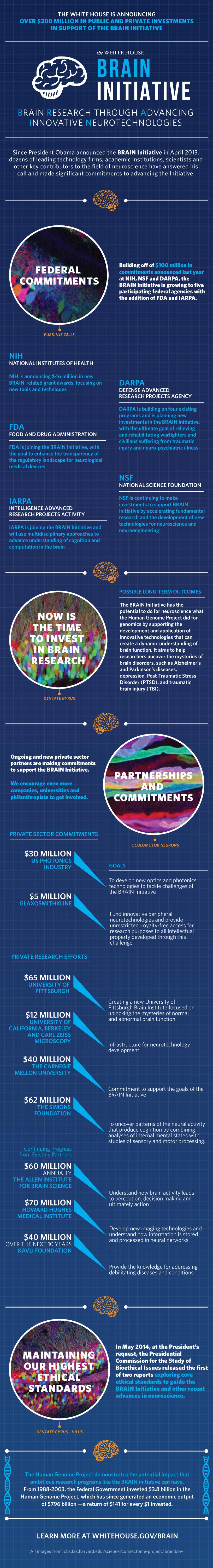 brain_infographic2014_0