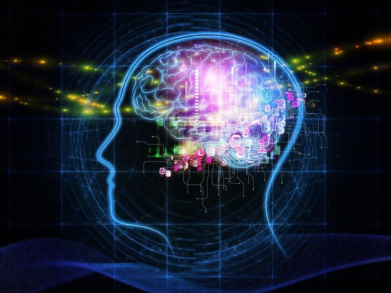 nesd mózg informacje sieci neuronowe