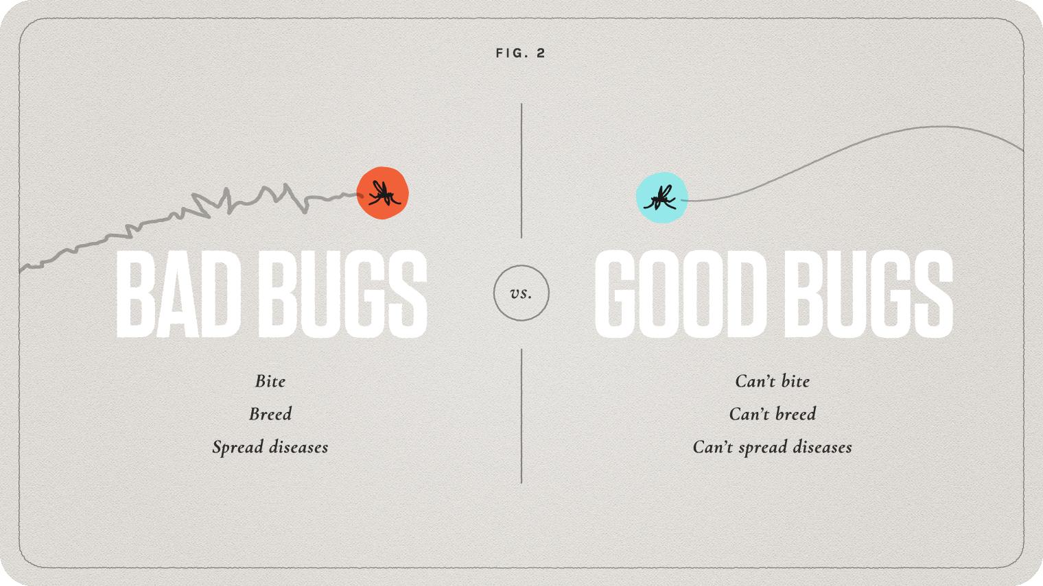 Debug Project grafika