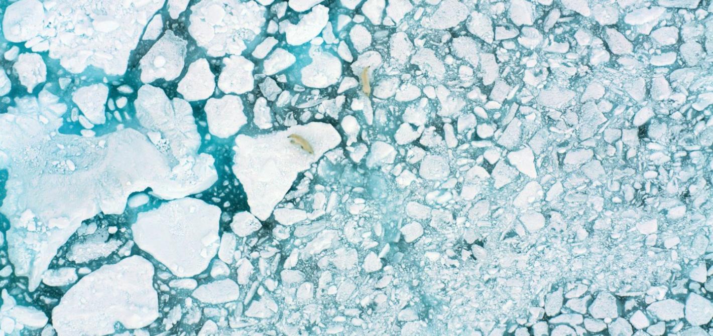 na ratunek arktyce