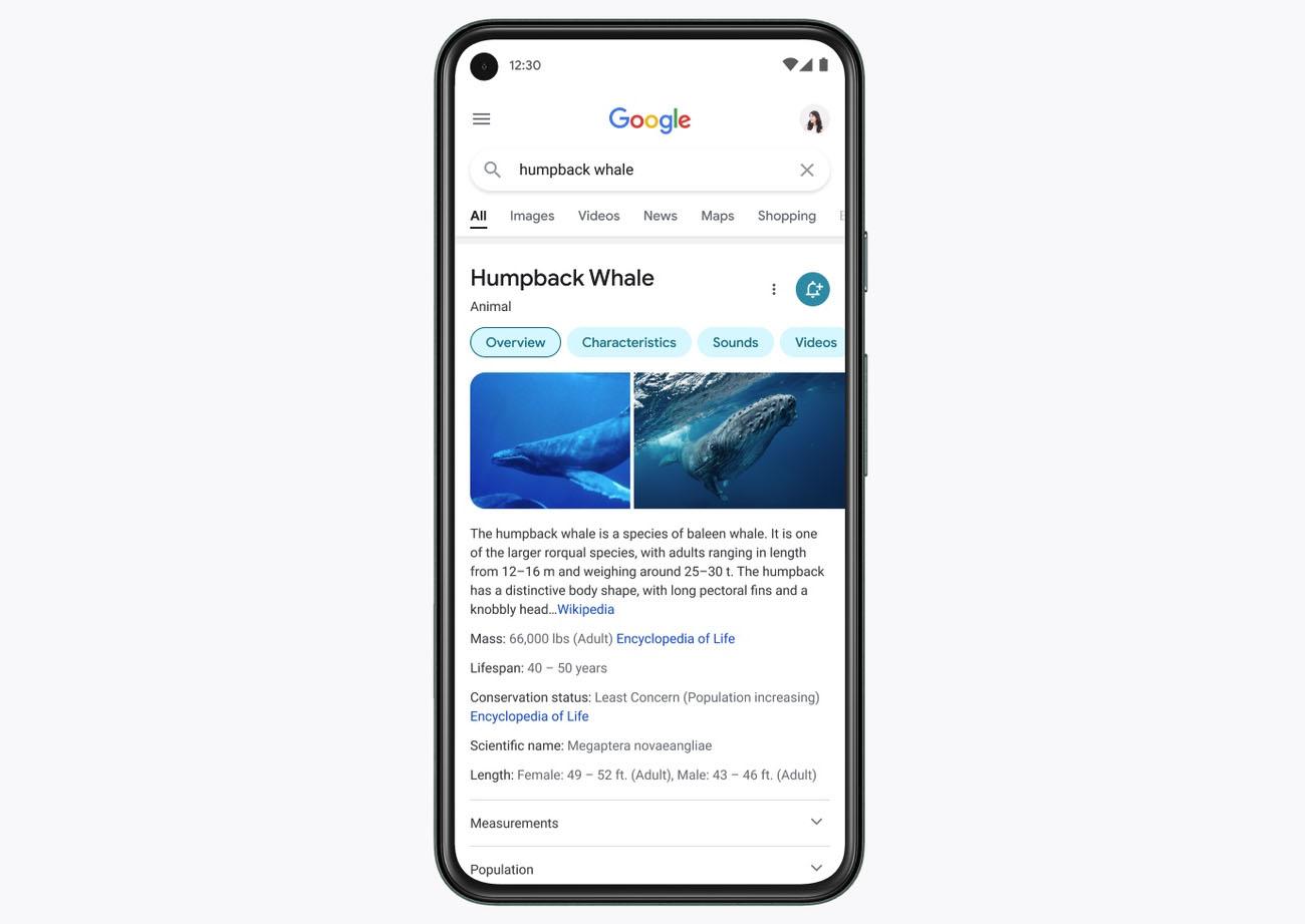 google wyszukiwanie